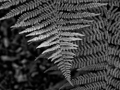 Ferns by Michael Dunne
